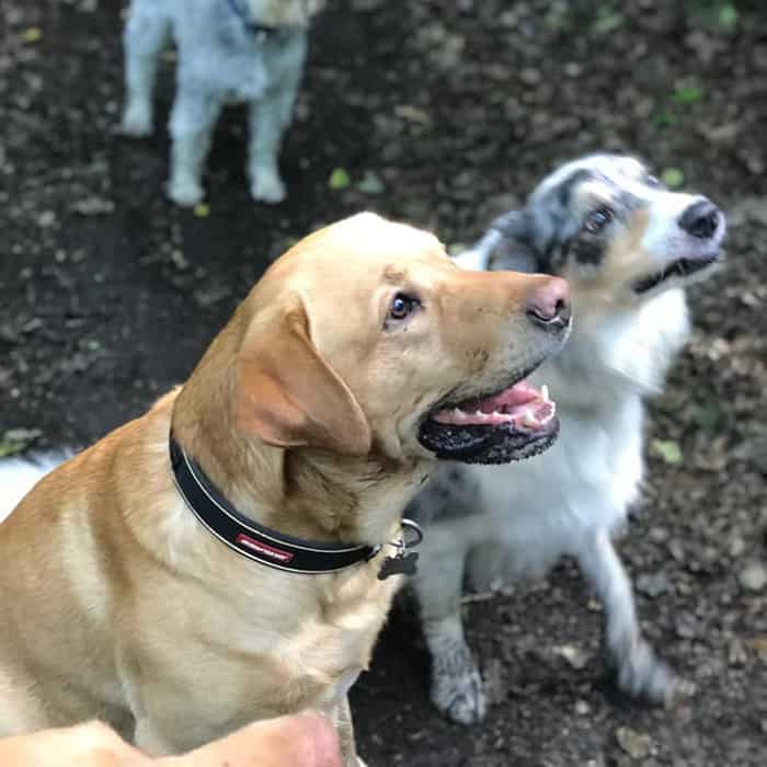 Dog training Apperley Bridge Idle Calverley Eccleshill Wrose Saltaire Thackley Rawdon