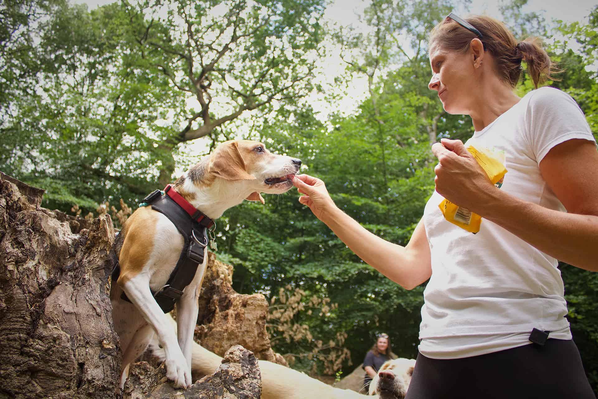 dog walker Apperley Bridge Idle Calverley Eccleshill Wrose Saltaire Thackley Rawdon