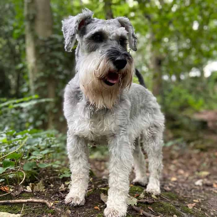 local dog walker trainer Apperley Bridge BD10