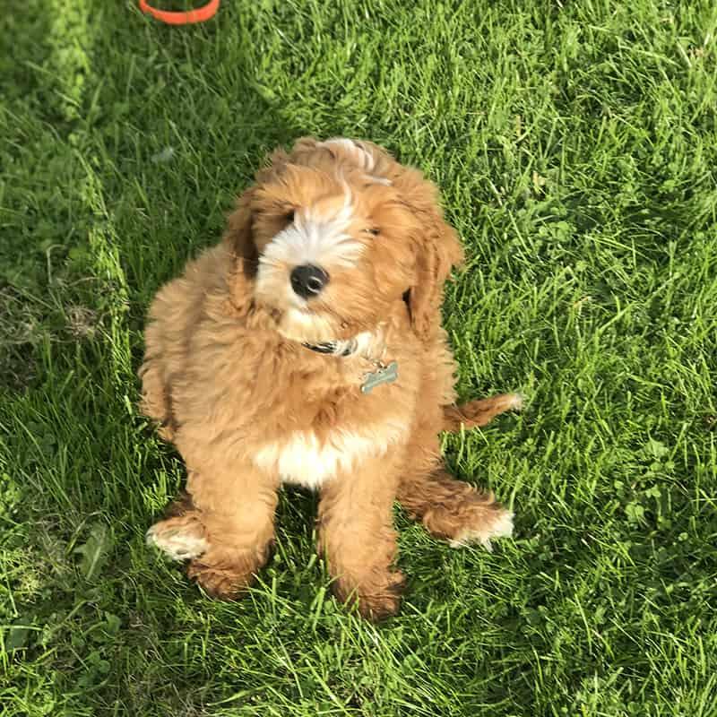 puppy training help Apperley Bridge Idle Calverley Eccleshill Wrose Saltaire Thackley Rawdon
