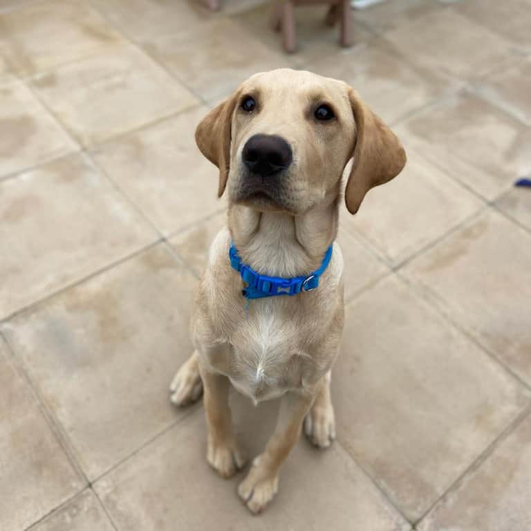 puppy training recall biting house