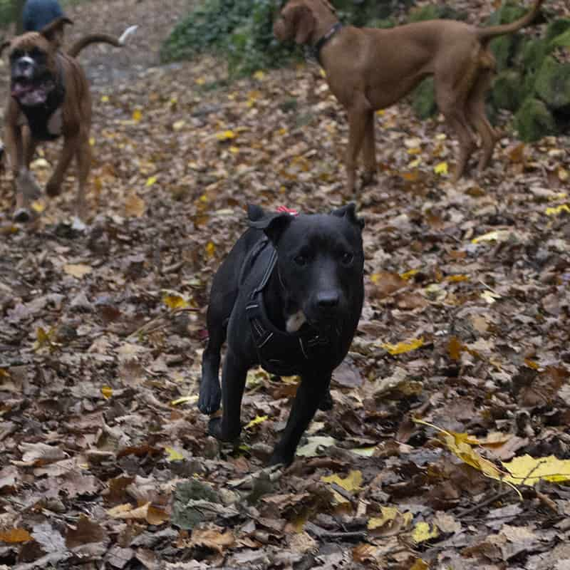 the great outpaws dog training service apperley bridge