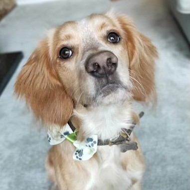 The Great OutPaws bow ties