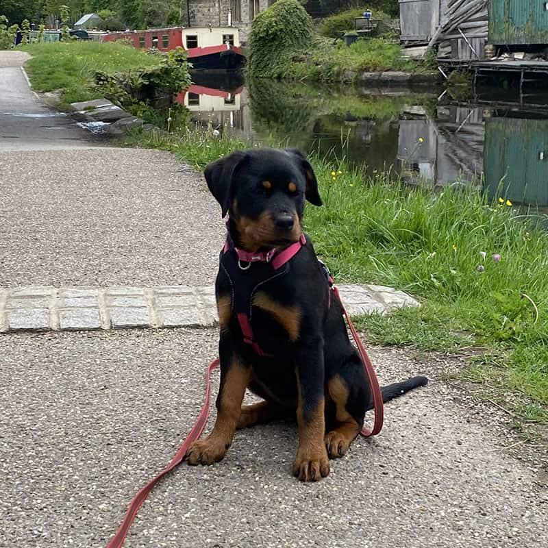 puppy classes bradford Apperley Bridge Idle Calverley Eccleshill Wrose Saltaire Thackley Rawdon.