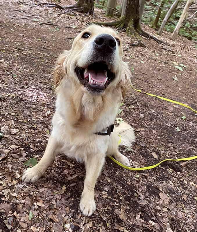 dog trainer Apperley Bridge Idle Calverley Eccleshill Wrose Saltaire Thackley Rawdon